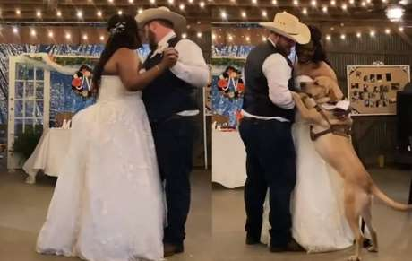 Cachorro dançando valsa com os tutores