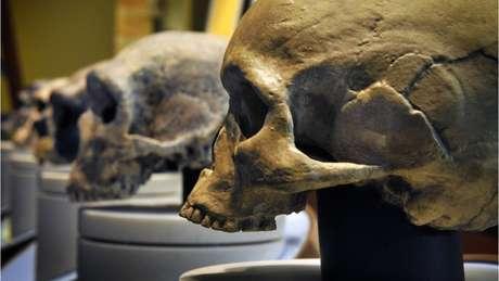 Uma das causas possíveis para o desaparecimento dos neandertais é a consanguinidade