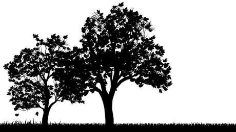 Estas árvores estão a salvo, a menos que você apareça