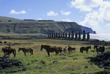 Se não fossem os cavalos na Ilha de Páscoa, a terra não teria chegado ao laboratório