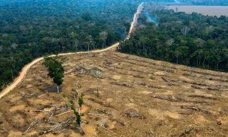 Desmatamento na Amazônia vem batendo recordes há 3 meses