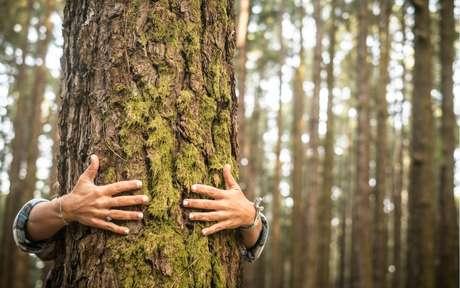 Meio ambiente: o que podemos fazer no dia a dia para ajudá lo?
