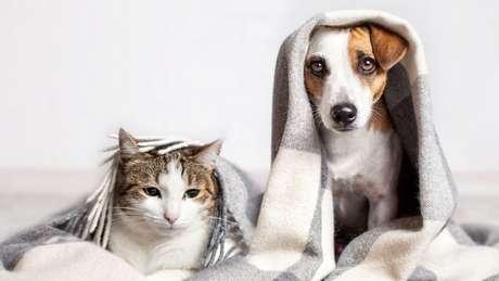 Cuidados especiais com os pets no inverno!