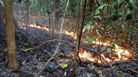 Incêndios florestais na Amazônia são feitos de fogos bem pequenos, com chamas de 30 cm de altura que se movem muito devagar durante dias e dias de queima