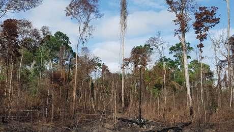 Floresta afetada pela seca e fogos na região de Santarém durante o El Niño em 2015