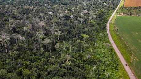 Queimada de floresta amazônica ao lado da BR 163 no Pará deixou grande número de árvores mortas (na imagem, sem folhas e esbranquiçadas)