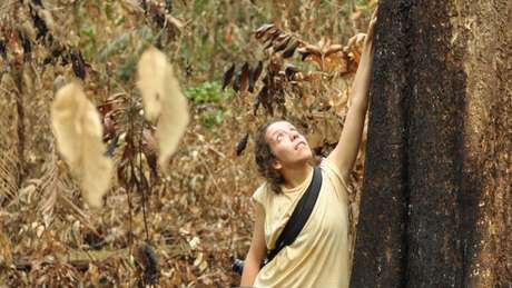 Entre outubro de 2015 e outubro de 2018, pesquisadores voltavam trimestralmente para 21 parcelas de terra e verificavam árvore por árvore