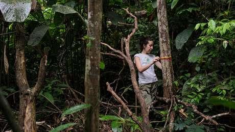 Autora principal do estudo, Erika Berenguer, monitora árvores em uma floresta amazônica queimada durante o El Niño de 2015