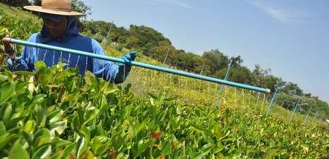 Para Bioflora, arborização urbana é negócio rentável