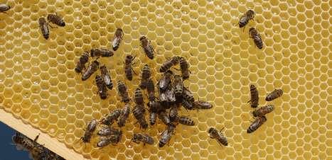 Como os favos das abelhas viram hexágonos?