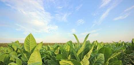 Setor tabagista pode bater recorde de R$ 7 bi em exportações