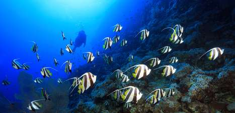 Veja onde ficam as praias mais indicadas para mergulhar