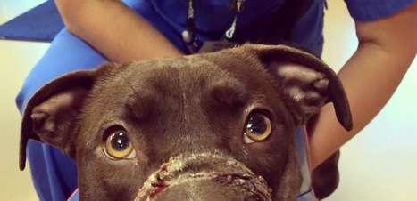 Cadela que teve focinho amarrado por dono se recupera bem