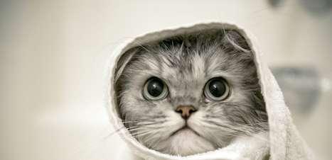 Estudo relaciona convívio com gatos à esquizofrenia