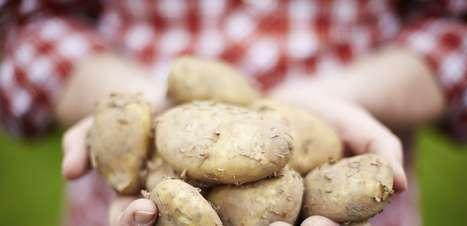 Você sabia que temos menos cromossomos do que as batatas?