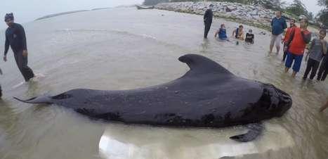 Pesquisadores encontram 80 sacolas plásticas em estômago de baleia morta na Tailândia