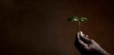 Illycaffè recebe certificação por desempenho social e ambiental