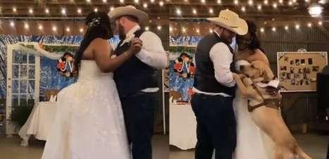 Cachorro dança valsa com os tutores recém-casados em cerimônia; assista