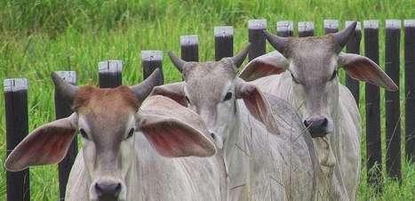 Propriedade rural que aplica cuidados no uso da ureia evita a intoxicação gado