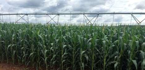 Brasil ajusta regra sobre transgênicos para garantir importação de grãos dos EUA