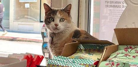 """Para sorrir! Conheça os gatinhos """"donos"""" de mercadinhos"""