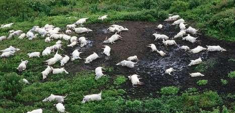 A misteriosa nuvem que matou milhares de pessoas e animais em Camarões