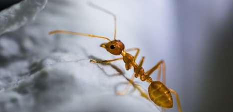 Formigas cavam túneis de modo similar a como jogamos Jenga