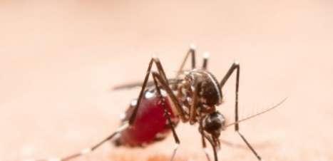 Em ato histórico, OMS aprova uso de vacina contra malária