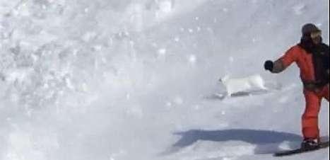 Coragem! Coelho saltitante atravessa avalanche e sobrevive