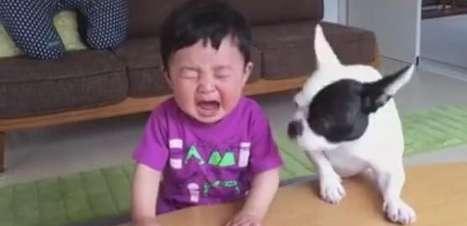 Chateados! Bebê e filhote choram após disputa por biscoito