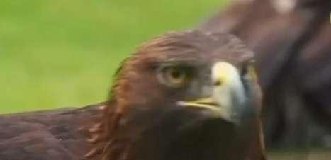 Instituto se dedica a conservar águia símbolo do México