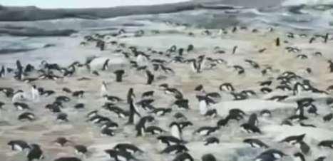 Pinguins da Antártida são estudados com o uso de 'timelapse'