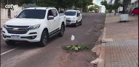 Atenção motoristas: buraco em rua do São Cristóvão está coberto de folhas