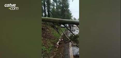 Árvore atinge caminhonete durante temporal e interdita PR 180