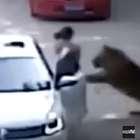 VÍDEO: Tigres matan a una mujer y hieren a otra en un ...