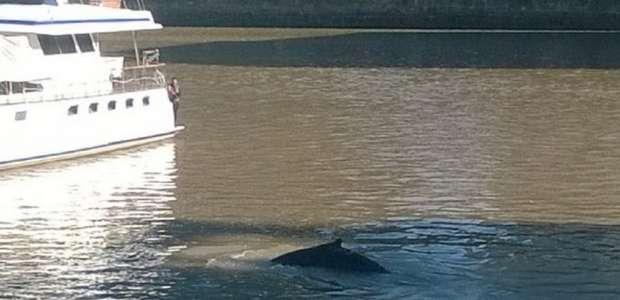 Insólito: apareció una ballena en Puerto Madero