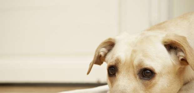 Collares médicos que monitorean la salud de tu mascota