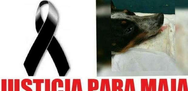 Indignación en Veracruz por mutilación y asesinato de Maja