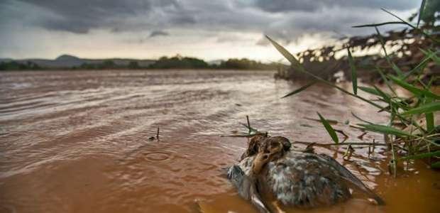 Lama, lágrimas e morte: a jornada de fotógrafo no rio Doce