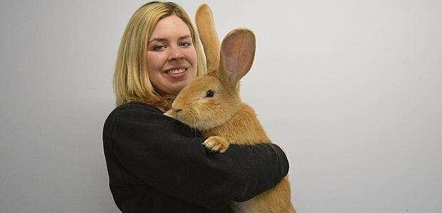 Atlas, el conejo más grande del mundo busca hogar
