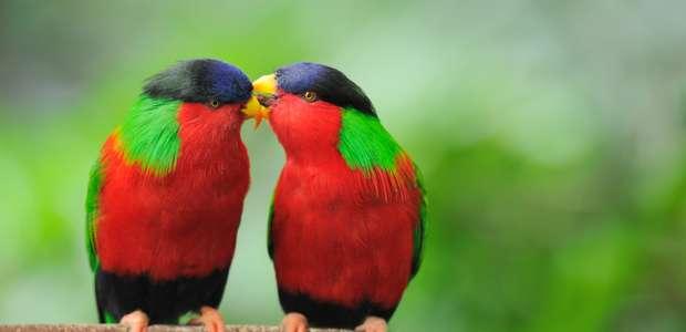 San Valentín: el amor no es sólo cosa de humanos
