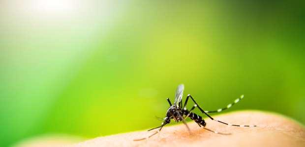 ¿A quiénes pican los mosquitos?