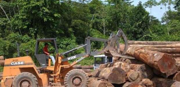 AM perde 7.989 km² de floresta, maior desmatamento em 8 anos