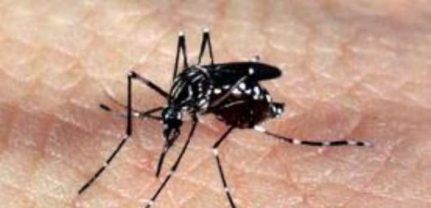 Sobe para 89 número de mortes confirmadas por febre amarela