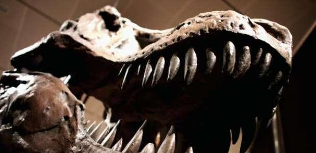 Hallan al 'mejor fósil de dinosaurio', pasó millones de ...
