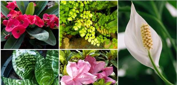As plantas da sua casa que podem ser tóxicas para os ...