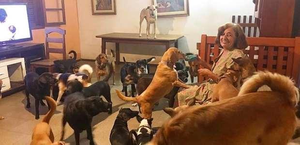 Senhora supera depressão profunda com o amor de seus 37 cães