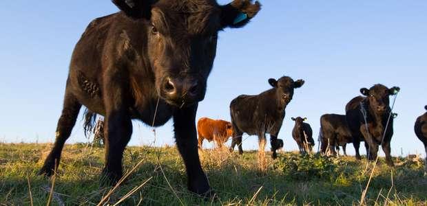 Doença da vaca louca: o que se sabe sobre o caso ...