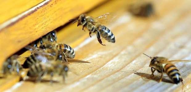 Médico encontra quatro abelhas vivas em olho de mulher ...