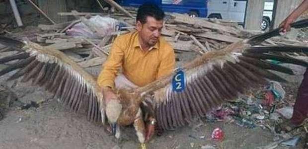 Abutre é capturado no Iêmen acusado de espionagem